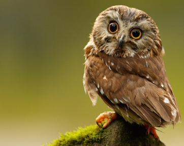 An owl and non ontological owl
